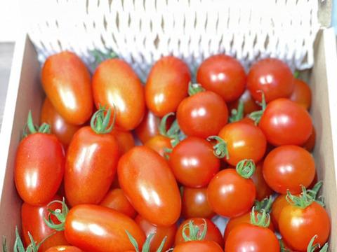 ミニトマト2種類詰め合わせ(約1kg)