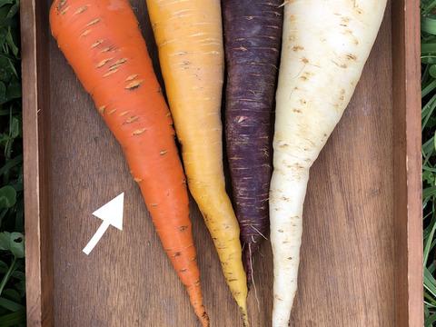 【北海道・芽室】香り深いニンジン🥕無選別【農薬化学肥料不使用】(8kg)