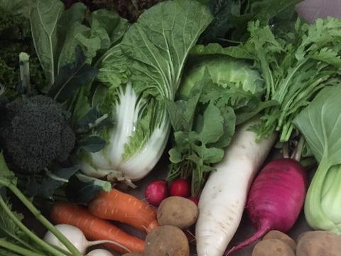 白菜と秋冬野菜おまかせセット