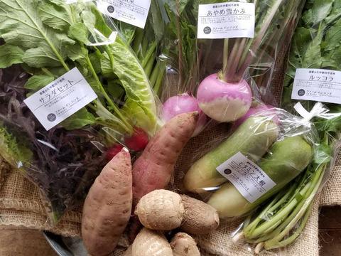 朝どり新鮮♪季節のお野菜セット(7-8品目)