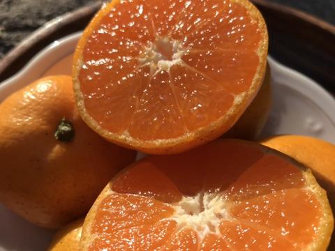 【酸味と甘さの黄金比率】3kg『金の蜜柑』【お試しサイズ】