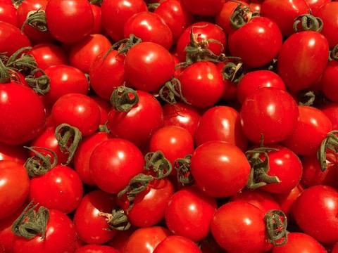 「ひんやり屋」ミニトマト 太陽の恵みをたっぷりもらった糖度10度以上の極上「ほれトマト」1kg