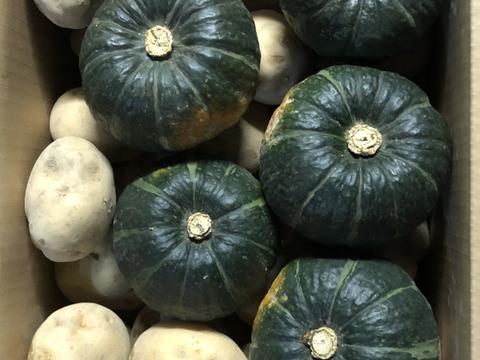ビタミンCタップリ!有機ジャガイモ北あかり7kgと有機南瓜坊ちゃん5個のセット