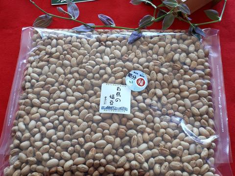 白馬の福豆 砂糖豆500g【大容量】