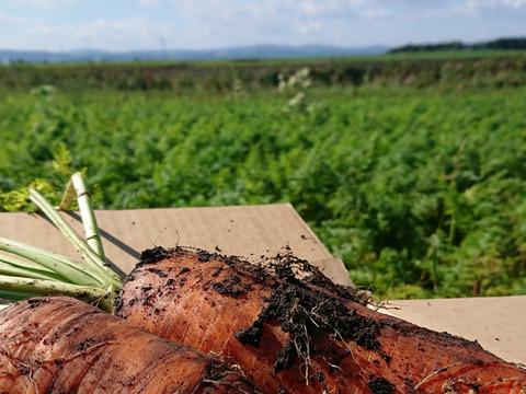 【北海道自然栽培】土つき「ジュース用 ぽっけのにんじん」