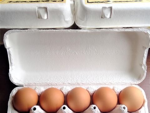 1日1セット限定!!国産鶏種もみじの新鮮たまご90個(1パック割れ保障)