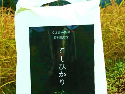 【新米】【玄米5㎏】一粒一粒に甘みのぎゅっとつまった 特別栽培コシヒカリ 令和2年度産