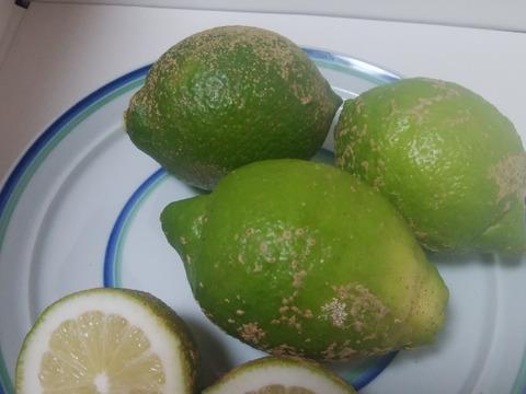 青いレモン B品4㎏