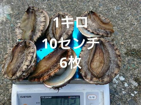 アカ(メガイアワビ)1キロ