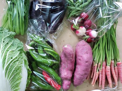 恋する京野菜♥️満足セット❗【100サイズ】【7~9品目】