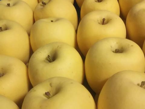 【10箱限定】甘~い「はるか」りんご3キロ