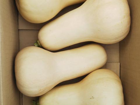 エミリーさん リクエスト商品 バターナッツ ワキ菜セット