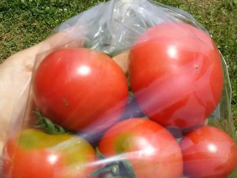 野菜たっぷりラタトゥイユのセット❗❗✨✨✨【数量限定】子供に食べさせたいばぁばのモノスゴイ野菜😋🍅🍅🍅