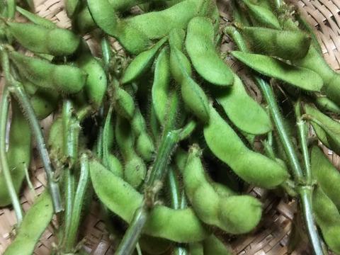 耕さない草とともに22年の畑  種取りやさいたち+昭和のリバイバル玄米3合450g、(肥料農薬不使用おだがけ)
