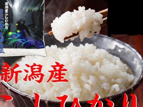 コシヒカリ  10kg  白米  令和二年産