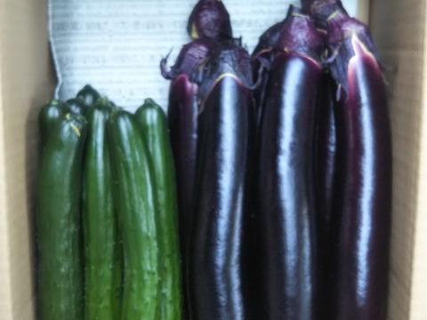 【緊急出展】 きゅうり+長ナス(ふわトロ長ナス) 急成長で大量に採れてます。 特価販売です。  どちらも世界農業遺産 ブランド野菜シリーズ
