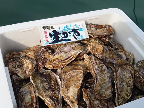 今が旬!栄養満点【加熱用】殻付き牡蠣Lサイズ10キロ(100個前後)