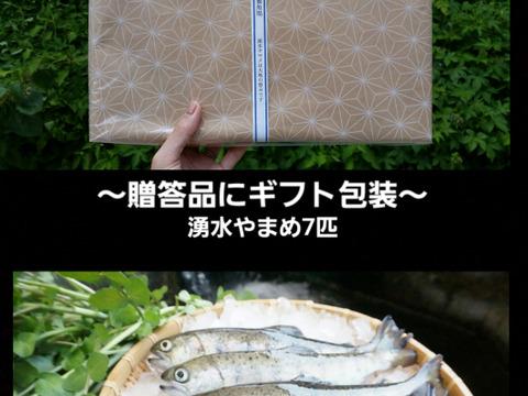 ~贈答品用~阿蘇から届く!! まぼろしの魚・かわべの湧水やまめ(7匹 活〆急速冷凍!)