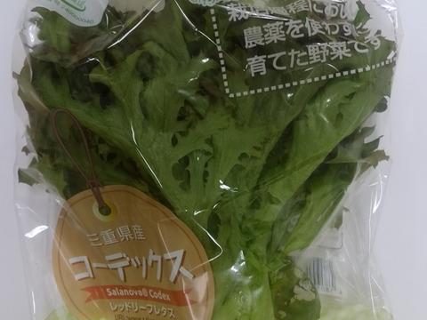 【農薬:栽培期間中不使用】【希少種】ふわべじ レッドリーフレタス「サラノバ コーデックス」(10袋入り1袋60g以上) 個別包装で衛生的。土や虫がつかないクリーンな環境【GAP認証野菜】