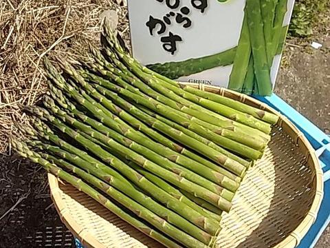 【北海道産】お徳用詰め合わせセット1kg!S~Mサイズ混合グリーンアスパラガス