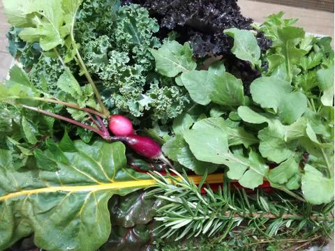 露地育ちフレッシュハーブと旬野菜セット(7~8品目)【農薬・化学肥料不使用】