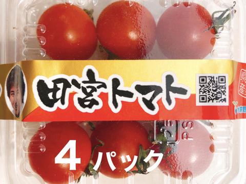 【お試し市】コクトマ! こくがあって味濃いめ 八ヶ岳産ミニトマト 4パック 初めての方におすすめ!  減農薬栽培