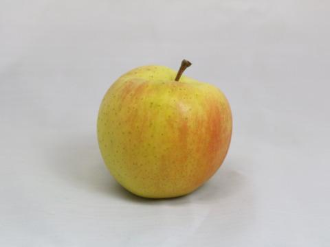 【先行予約】濃厚な甘さ!フルーティーな香り!青森県を代表する黄色いりんご🍏トキ🍏青森りんご 2.5kg