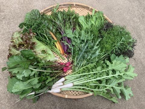 はたBOX (花)季節の恵詰め合わせ(80サイズ)栽培期間中農薬化学肥料不使用と卵のセット