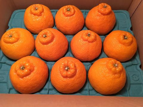 【予約販売特価10%OFF】高級柑橘不知火(デコ) お試しセット(8~12玉)※2月上旬より順次発送開始