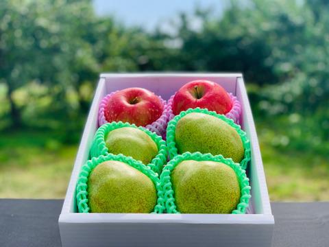 【訳あり洋梨とりんごの詰め合わせ! 数量限定!】 訳あり果物 品種おまかせ 約2㎏ ご家庭用やおすそ分けに丁度いい!W2ー02