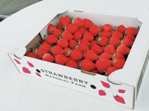 自家農園産恋いちご(1kg.)