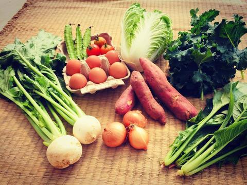 こどもの味覚を育む野菜セット(お試し野菜7種、卵6個)