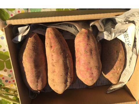ねっとり極甘!長崎五島『安納芋』天ぷらサイズ2kg