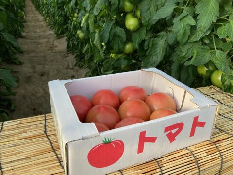 甘さと酸味が絶妙!桃太郎トマト(2kg)