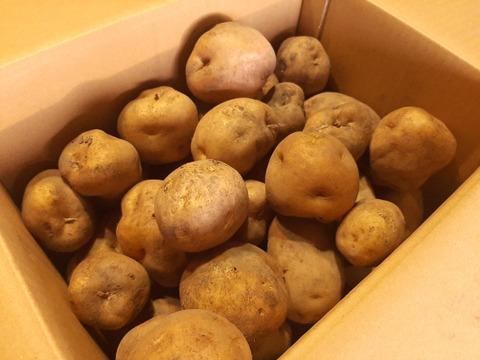 【北海道産】ほっこりと、ほんのり甘い有機栽培キタアカリ(5㎏)