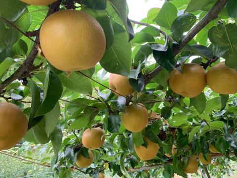 熊本県産 豊水 3kg(梨)