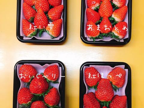 目指せいちごソムリエ!!4品種食べ比べセット(250g×4パック)