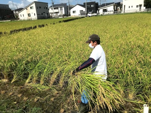 学生と作ったお米 日本農業実践学園のキヌヒカリ(玄米5kg)