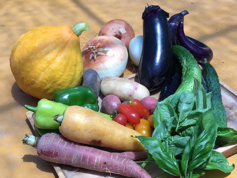 9/25更新✨10つの野菜チョイス!農薬・化学肥料不使用の野菜セット🥬