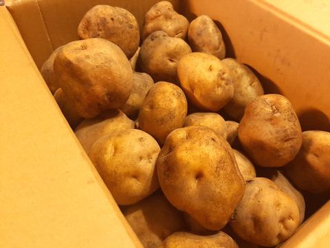 【北海道産】この風味、やっぱり定番!有機栽培の男爵いも(10㎏)