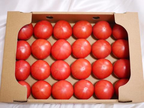赤熟もぎりの王様トマト4kg箱詰め