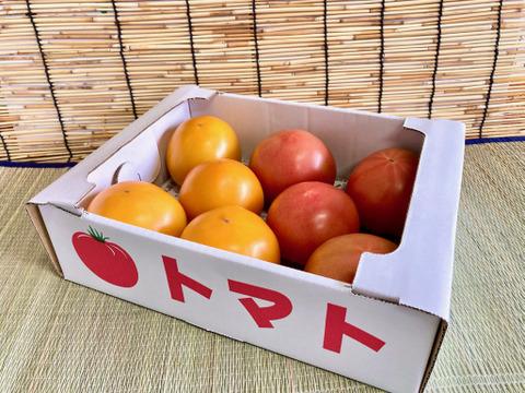 見た目鮮やか!2色の桃太郎トマトセット(4kg)