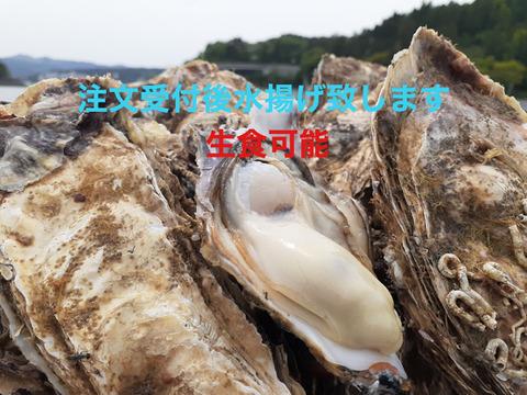 注文受け付け後水揚げ!生食可 お試しセット♪普通サイズ真牡蠣8個 ラムサール条約湿地志津川湾より漁師直送!