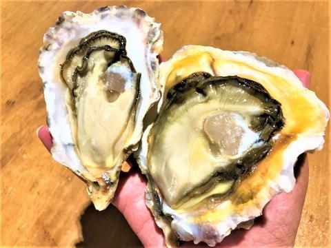 【初回限定BOX】真牡蠣と岩牡蠣の食べ比べセット みるくがきL サイズと糸島サウンドLサイズ 合計6個 生食可