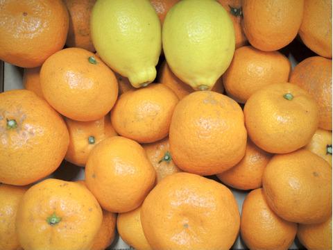 ☆和歌山産☆みかん 3kg + レモン