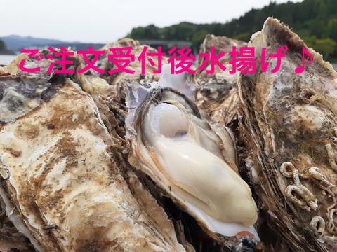 クール冷蔵便♪注文受け付け後水揚げ! 真牡蠣4kg(kg/6~9個) ラムサール条約湿地志津川湾より漁師直送!