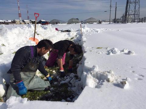 寒さに耐え美味しさピーク‼︎ MEGLIY金沢の冬野菜セット(8〜10品)【すべて農薬不使用】