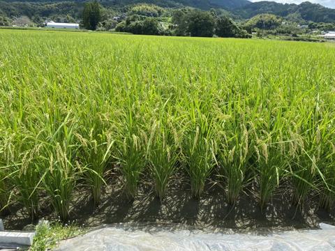 新米 熊本県産ヒノヒカリ 玄米20k