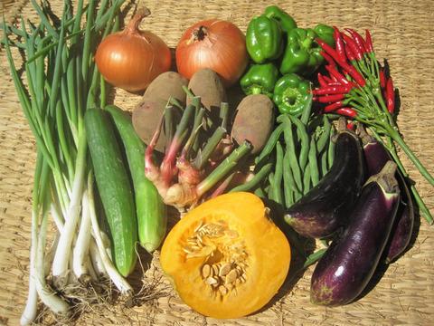 玄米15合と季節の野菜10品目セット