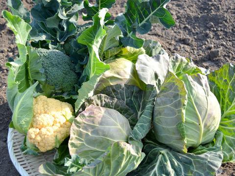 《初出品》冬のお野菜詰め合わせ